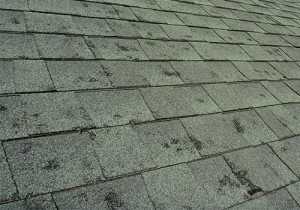 Hail Damage Repair Loveland Roofing Contractors Fort